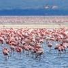 Lake Nakuru,Safari, Keňa