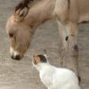 Lamu - oslí útulek, Keňa