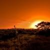 Safari, Keňa