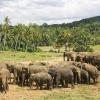 Sloní útulek, Srí Lanka