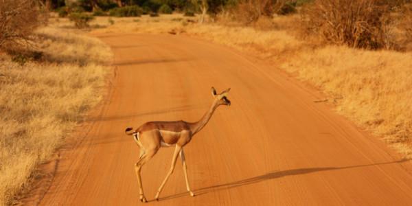 Tsavo East - národní park Keni