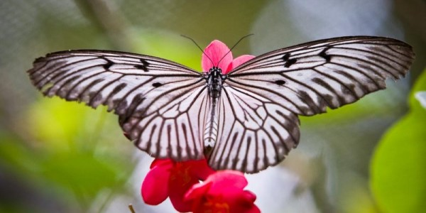 Bali - Motýlí park