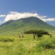 MOUNT KENYA – národní park