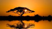 Saiwa Swamp - národní park