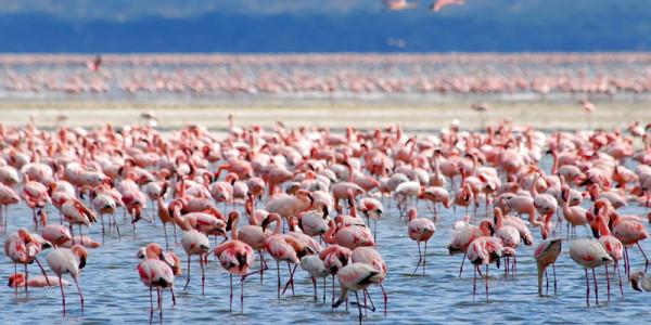 LAKE NAKURU - národní park