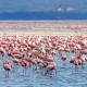 LAKE NAKURU – národní park