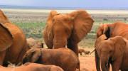 Tsavo West - národní park Keni