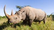 NAIROBI - národní park