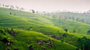 Srí Lanka - Nuwara Eliya