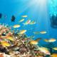Potápění a šnorchlování na Mauriciu