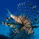Potápění a šnorchlování na Krétě
