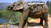 Srí Lanka - slon