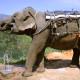 Výlety na Srí Lance